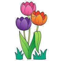 Раскраска три цветка тюльпаны для детей распечатать