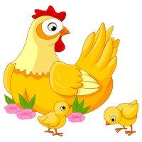 Раскраска мама курица и цыплята для детей распечатать