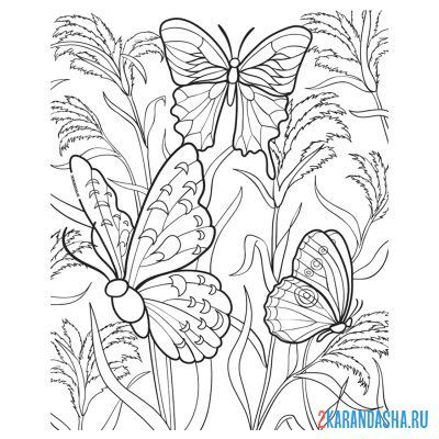 Print a coloring book butterflies on A4
