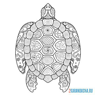 Print a coloring book turtle on A4