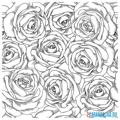 Print a coloring book rose flowers on A4