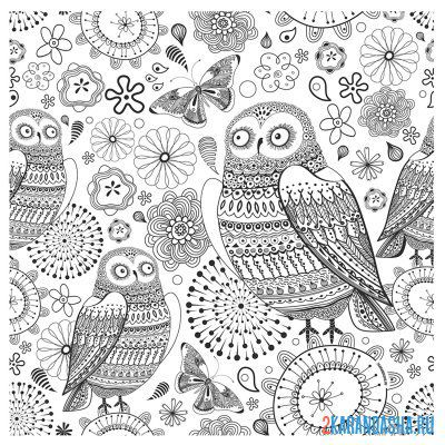 Print a coloring book owl birds in patterns on A4