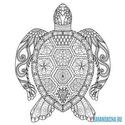 Print a coloring book turtle patterns on A4