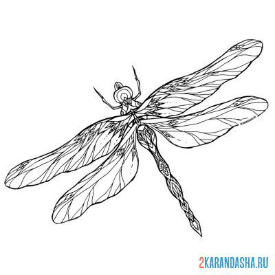 Print a coloring book dragonfly on A4