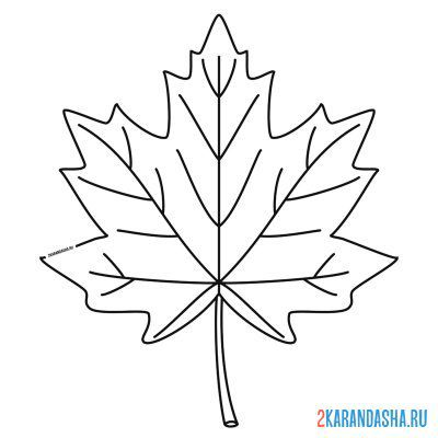 Print a coloring book autumn maple leaf on A4