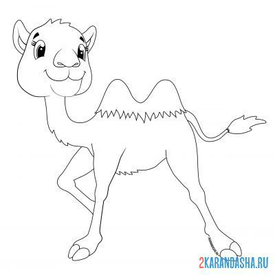 Print a coloring book playful baby camel on A4