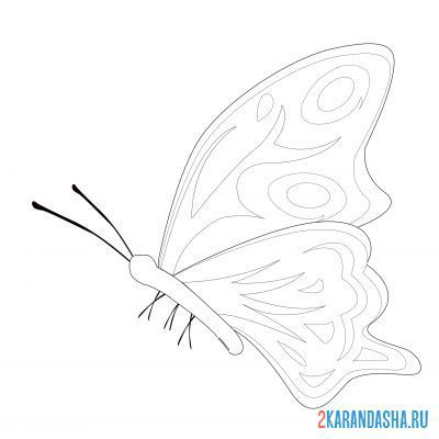 Print a coloring book butterfly with antennae on A4