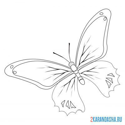 Print a coloring book butterfly with beautiful wings on A4