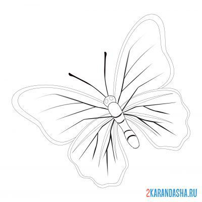Print a coloring book butterfly with lines on the wings on A4