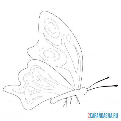 Print a coloring book butterfly sitting on A4