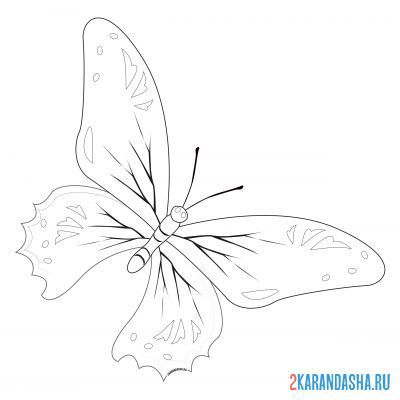 Print a coloring book butterfly of unearthly beauty on A4