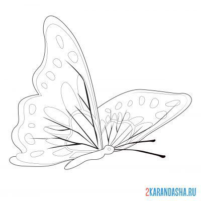 Print a coloring book butterfly with patterns on A4