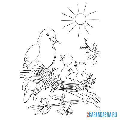 Raskraska Vesna Ptica S Ptencami V Gnezde Dlya Detej Raspechatat