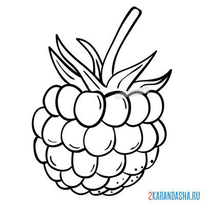 Print a coloring book juicy raspberries on A4