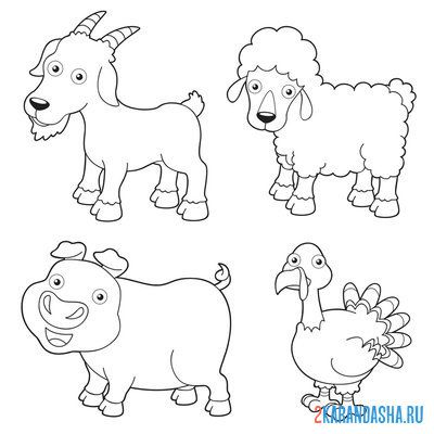 Print a coloring book animals goat, lamb, pig, turkey on A4