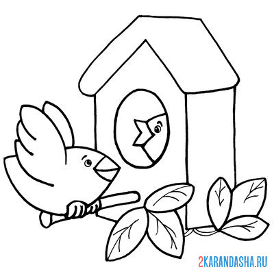 Print a coloring book bird and chicks on A4