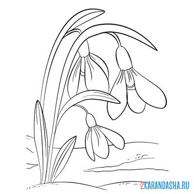 Раскраска весна, Подснежники весенние цветы для детей ...