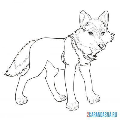 Раскраска волк-вожак распечать