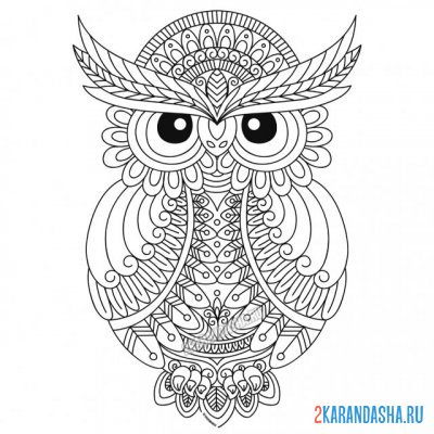 Print a coloring book owl on A4