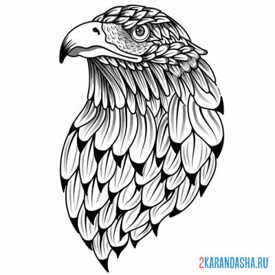 Print a coloring book handsome eagle on A4
