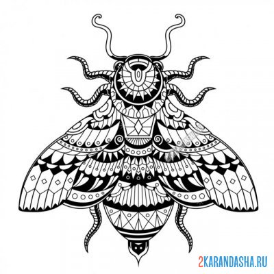 Print a coloring book insect fly on A4