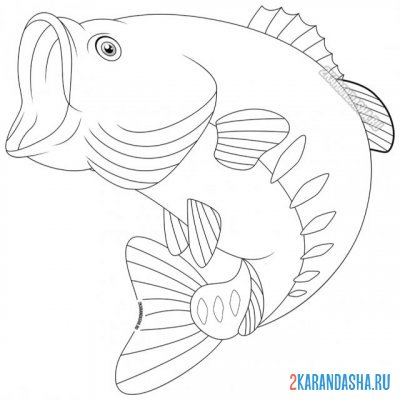 Print a coloring book river perch on A4