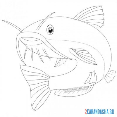 Print a coloring book big catfish with a mustache on A4