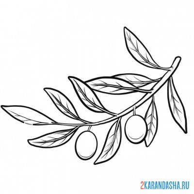 Print a coloring book sprig of olive on A4