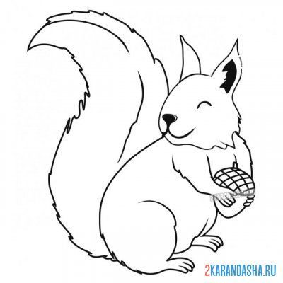 Print a coloring book real squirrel on A4