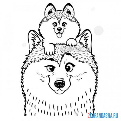 Print a coloring book cute dogs on A4