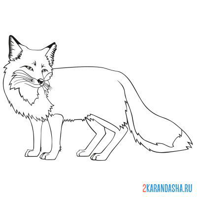 Print a coloring book red fox on A4