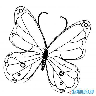 Print a coloring book beautiful butterfly on A4
