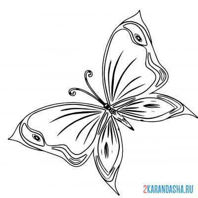 Print a coloring book complex butterfly on A4