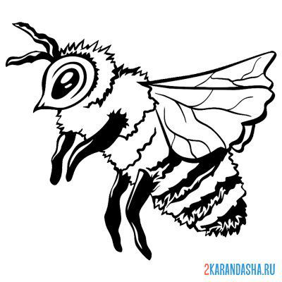 Print a coloring book bee like real on A4