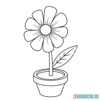 Print a coloring book gerbera flower or chamomile in a pot on A4
